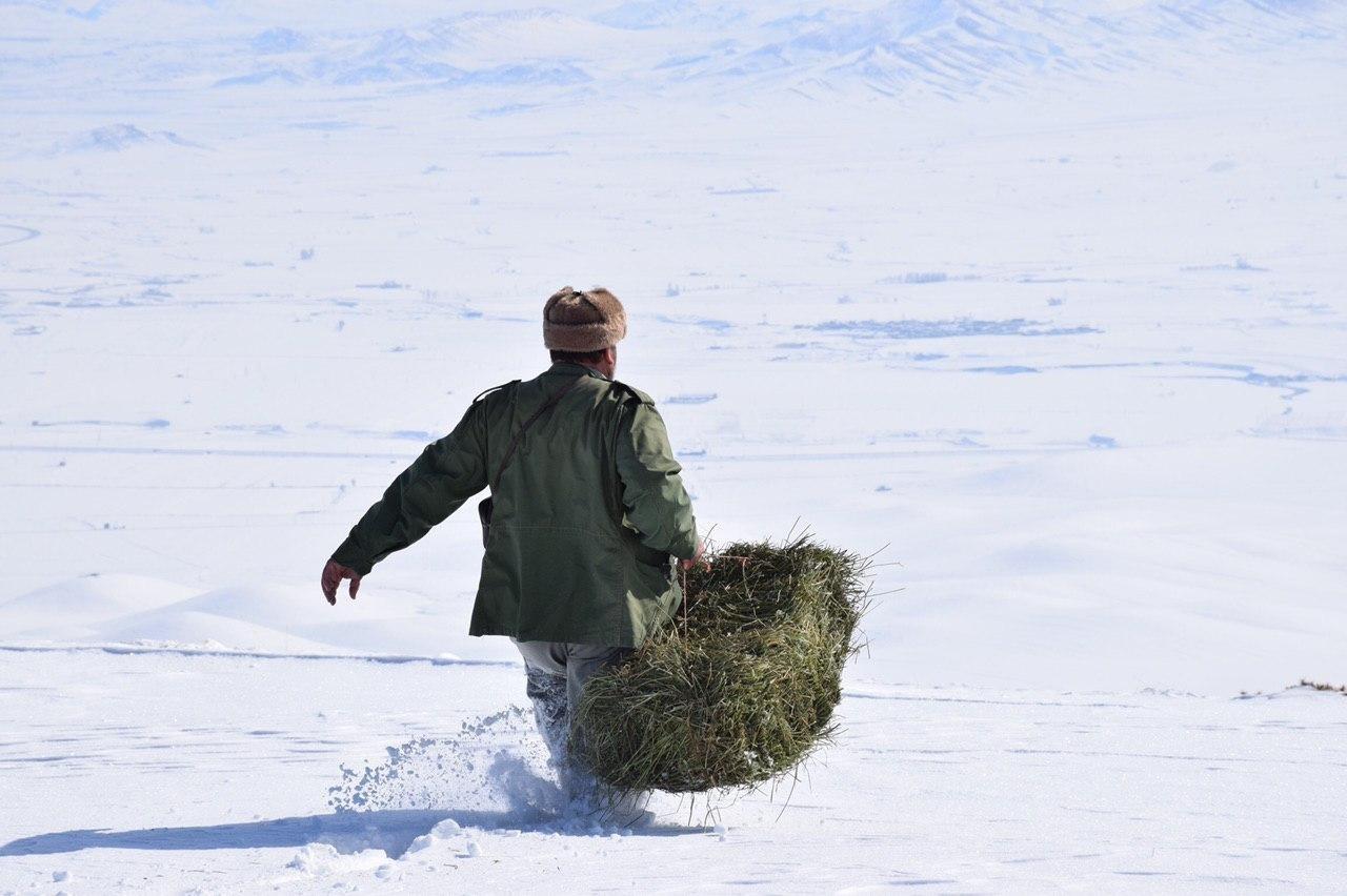توزیع علوفه برای حیات وحش در روزهای برفی