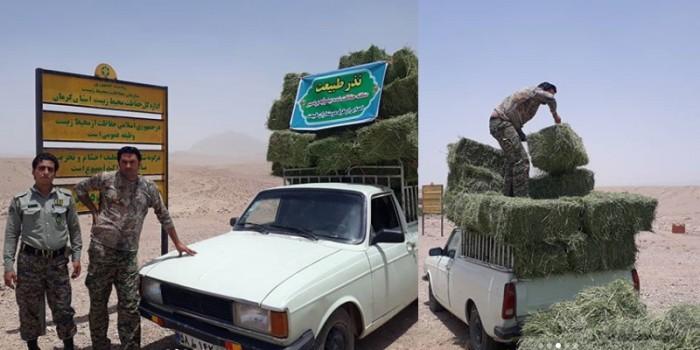 منطقه حفاظت شده بیدوئیه بردسیر کرمان