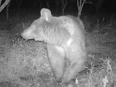 هدیه به باغدارخسارت دیده از خرس