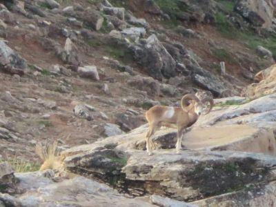 آبشخورحیات وحش در منطقه کرایی