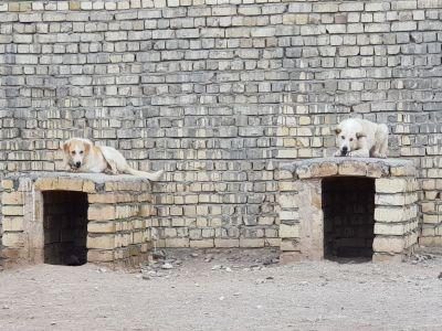نقل مکان پناهگاه جیران